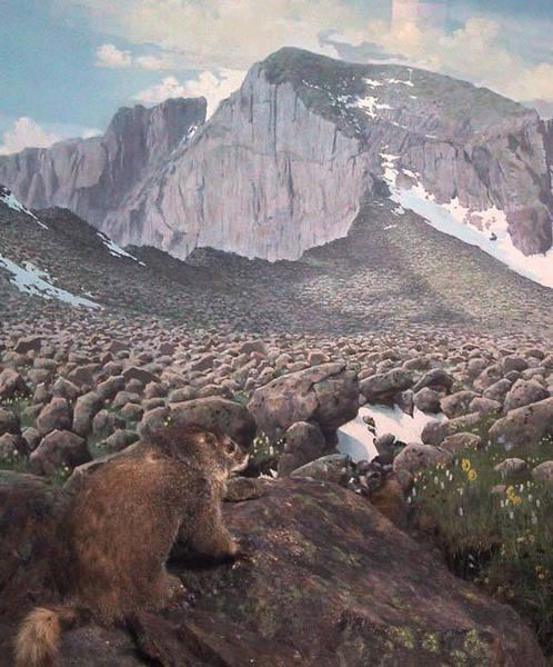 A marmot scopes out the Diamond.