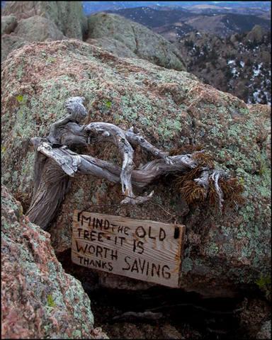 Artifacts on Greyrock's summit, January, '05.