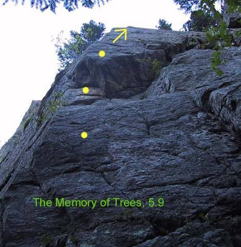 The Memory of Trees, first three bolts shown.