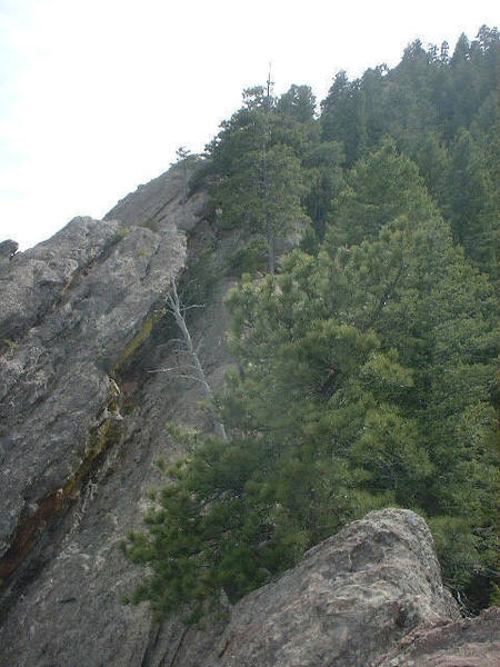 Summit ridge - note the dead 'descent tree' in center of photo.