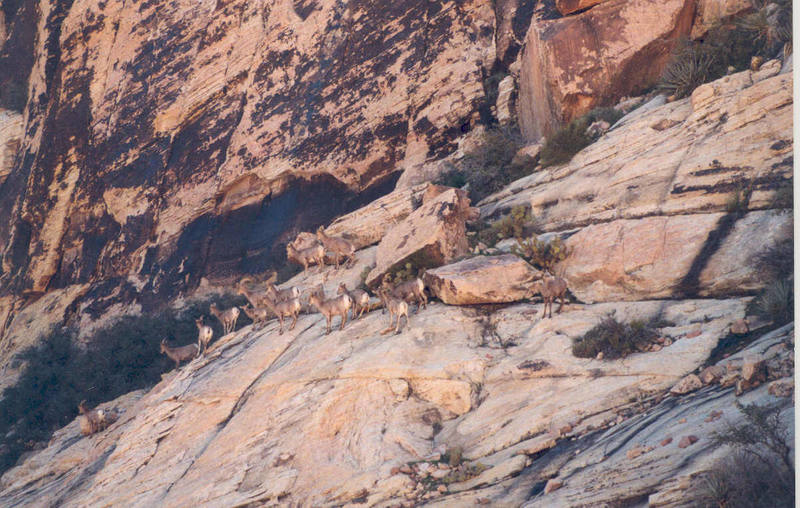 A herd of speed climbers, below the Brownstone Wall.