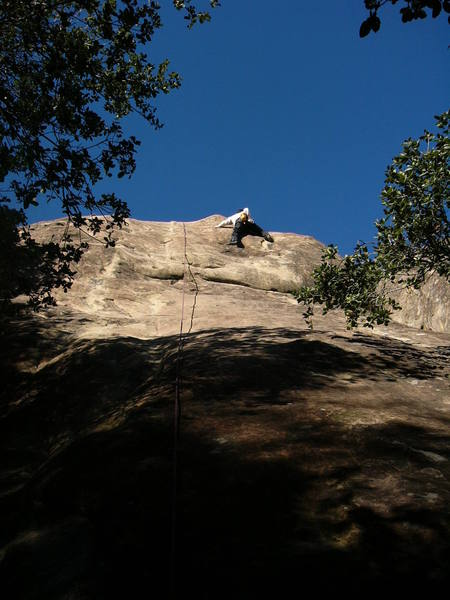 Risley above crux.  Climb starts just right and goes under branches.