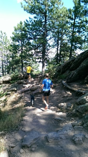 Popular with trail runners and canines