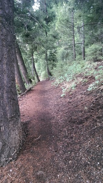 Wooded section of the Proctor Mountain Loop