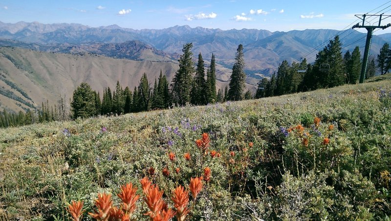 Abundant wildflowers on the Bald Mountain Trail