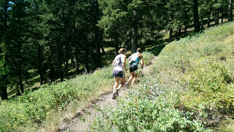 The Bald Mountain Trail is popular with trail runners