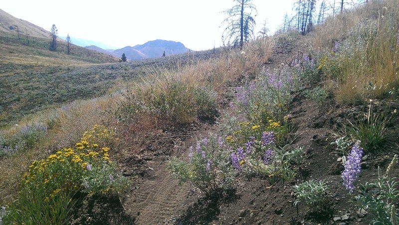 The views improve over the ridge