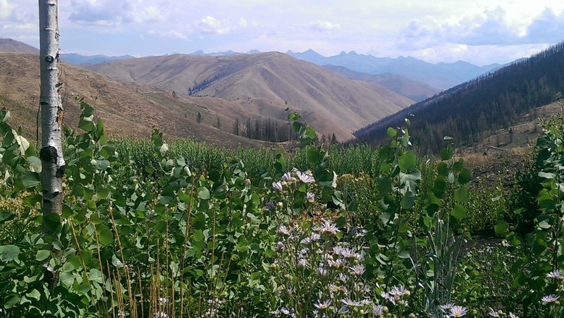 Wonderful views of the Pioneer Mountains