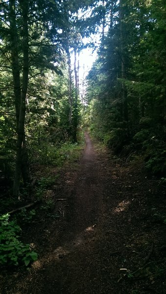 The woods feel surprisingly dense on the Pipeline Trail