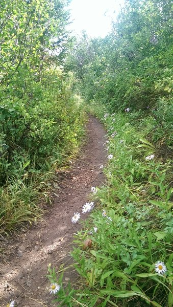 Smooth trail surface and scattered wildflowers on Pipeline