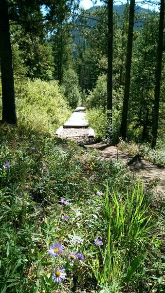 Wildflowers along the wooden path section