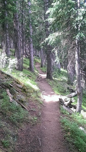 Pleasant does not begin to describe the Sunlight Trail