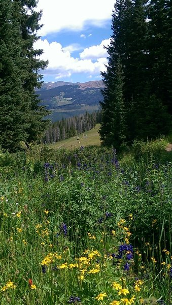 Abundant wildflowers complement views of the Gore Range