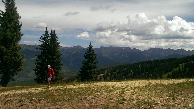 Summertime revegetation work at the top of Wildwood