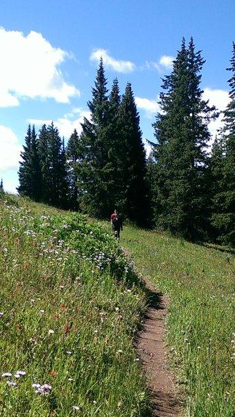 Ptarmigan trail crosses some of the Game Creek Bowl ski runs