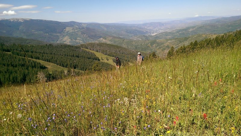 Huge wildflower meadows delight hikers on Vail's Ridge Route