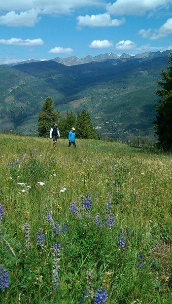 Wildflower meadows in abundance