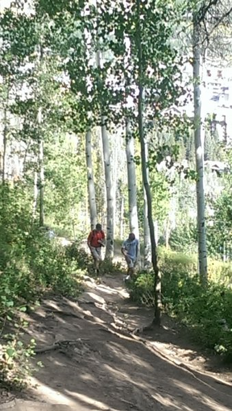Steep section of Berry Picker through aspen stands