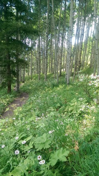No shortage of wildflowers on this trail