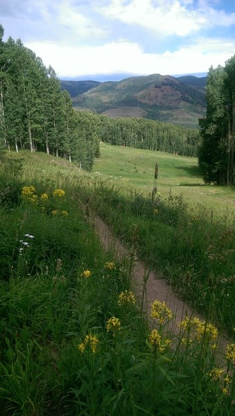 The Berry Picker Trail crosses multiple ski runs
