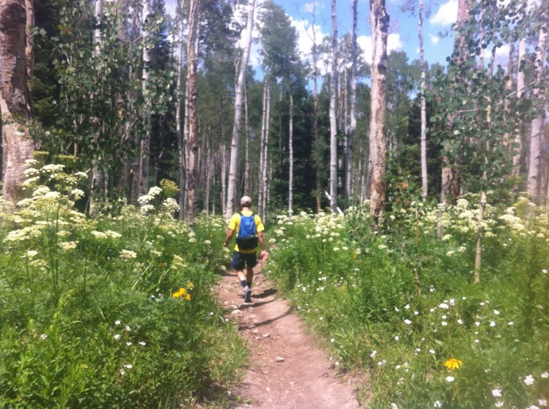 Heading back down Mount Sopris, surrounded by Aspen and wildflowers.
