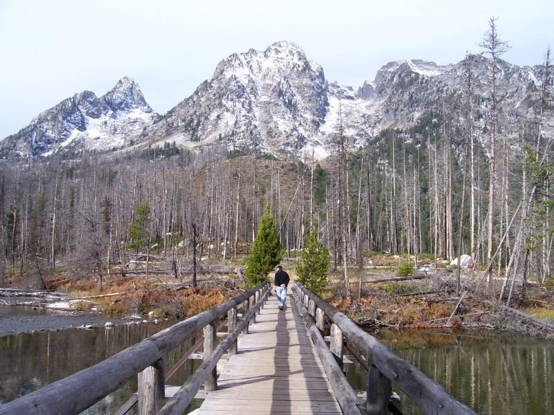 String Lake bridge showing a burn area in Fall.<br> <br> Image by the National Park Service (NPS).