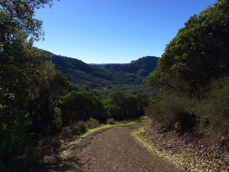 Gray Pine Trail winding its way down.