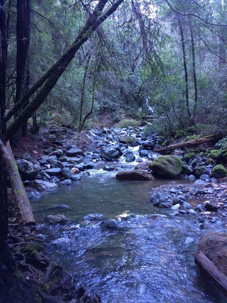 Nice bit of trail near Sonoma Creek