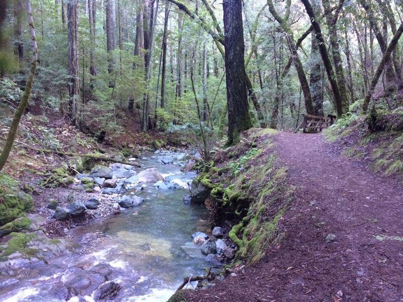 Trail along Sonoma Creek