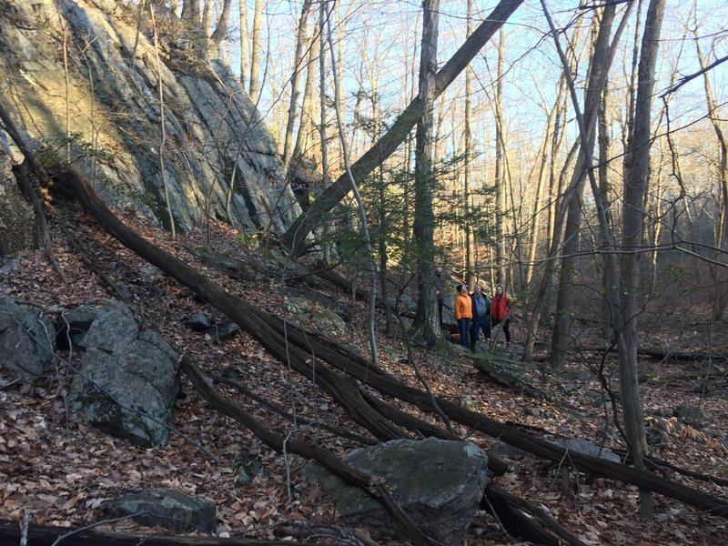 Yellow Trail - Pine Mountain features awesome rock formations and swamps.