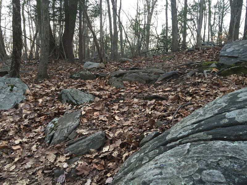 Great example of East Coast rocks on the Red Trail.
