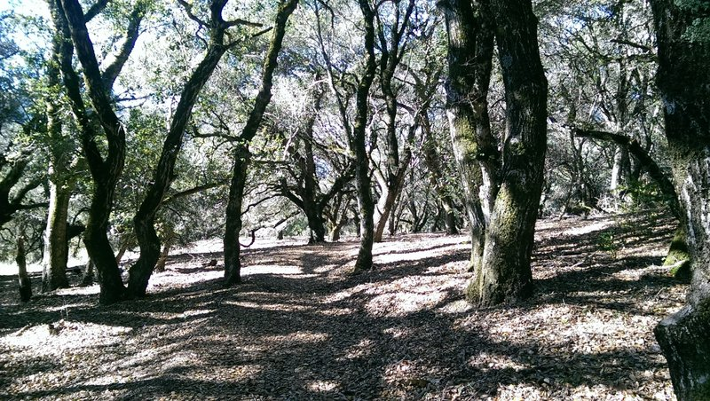 Wooded section provides welcome shade