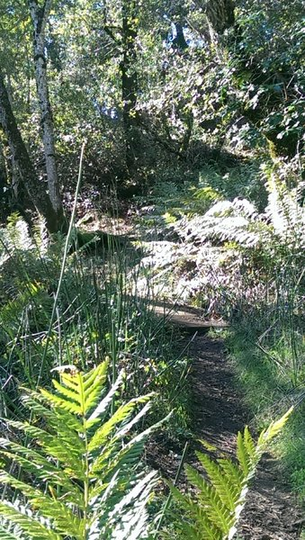 Ferny grotto at the beginning of the Vista Trail