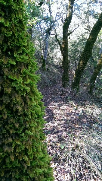 Lots of mossy rocks, trees and seasonal streams on this section of the Vista Trail