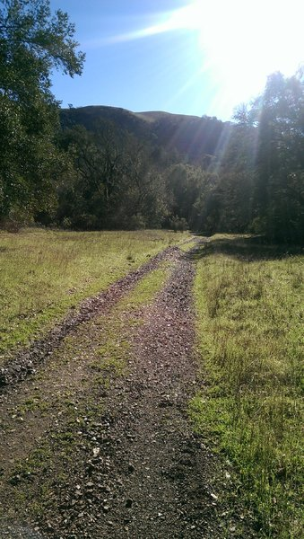Level, sunny section of the Gray Pine Trail