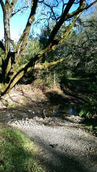 Crossing this wide part of Sonoma Creek can require rock-hopping or wading