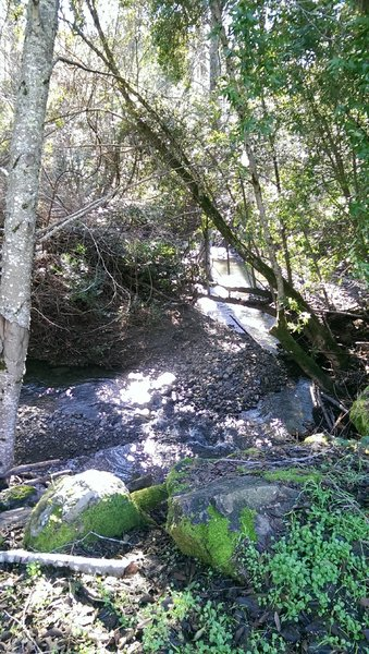 Sonoma Creek runs alongside much of the Meadow Trail