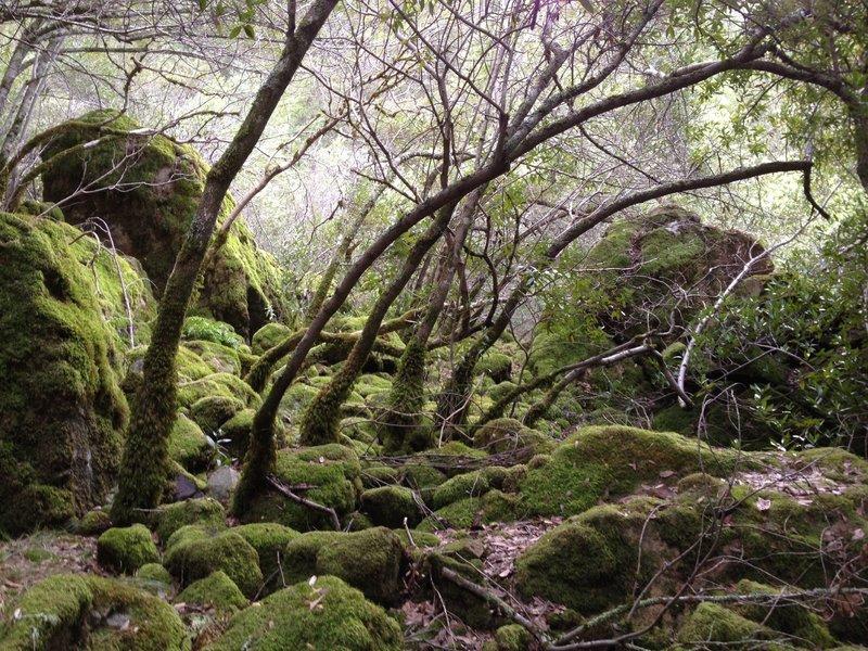 Amazingly green, cool scene for Sonoma County!