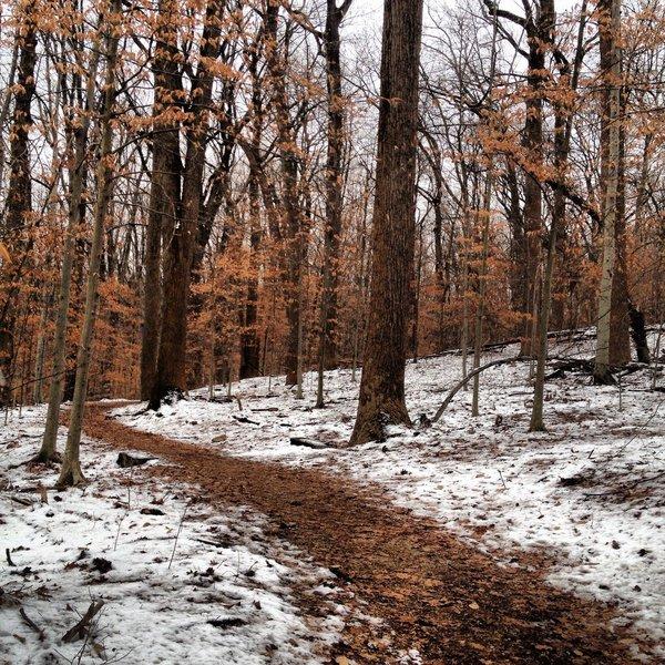 Western Ridge Trail