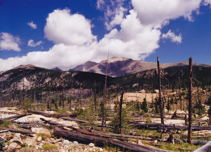 An old burn zone along Bluebird Lake Trail. with permission from dreamer 200