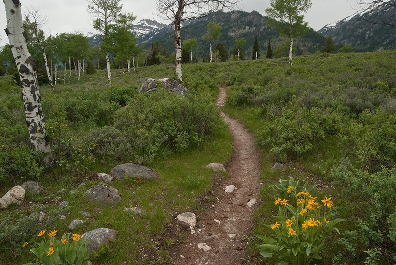 The Granite Canyon Trail with permission from Ralph Maughan