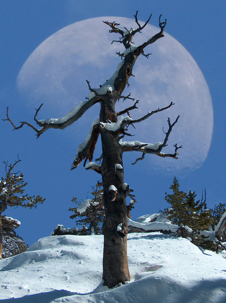 Once in a Blue Moon.... with permission from Richard Ryer