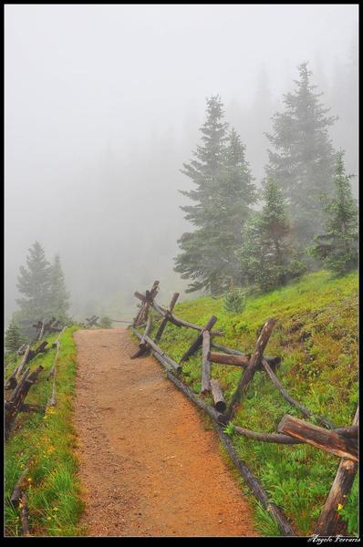 Timber Lake Trail