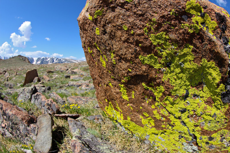 Lichen on granite boulder