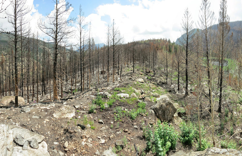 Burn on Cub Lake Trail