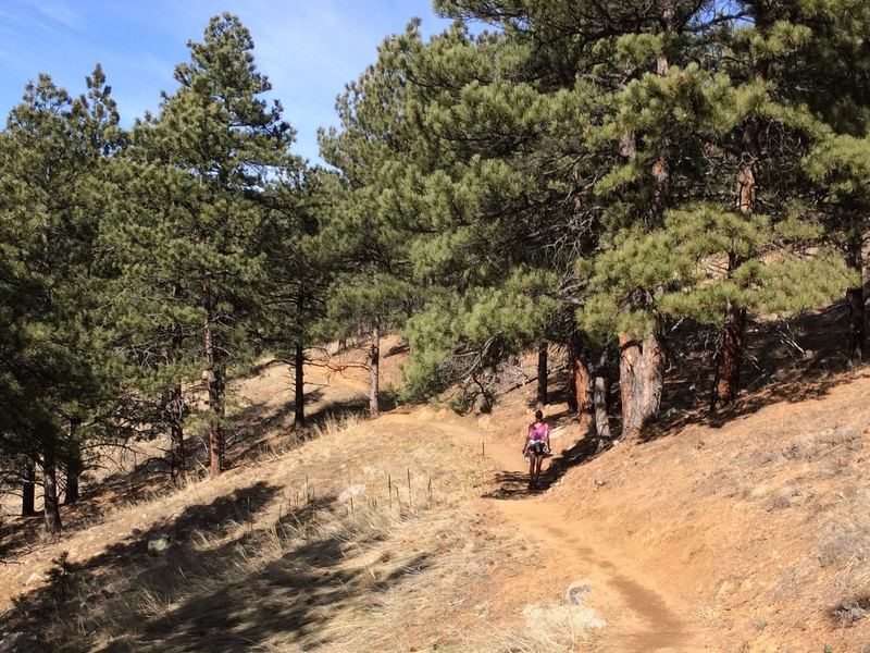 Typical lower section of trail - smooth and easy through the Ponderosas.