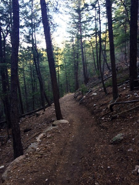 Forested switchback section of the Benjamin Loop Trail
