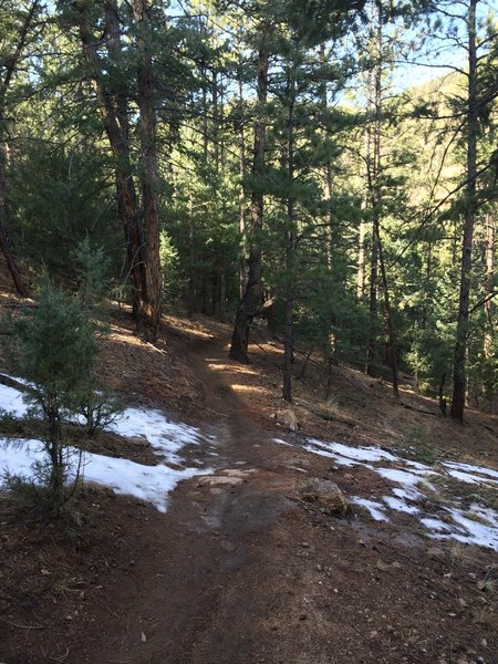 Forested singletrack.