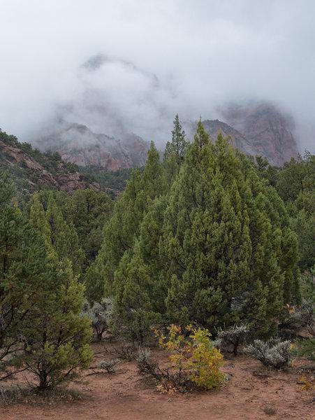 Zion Mists