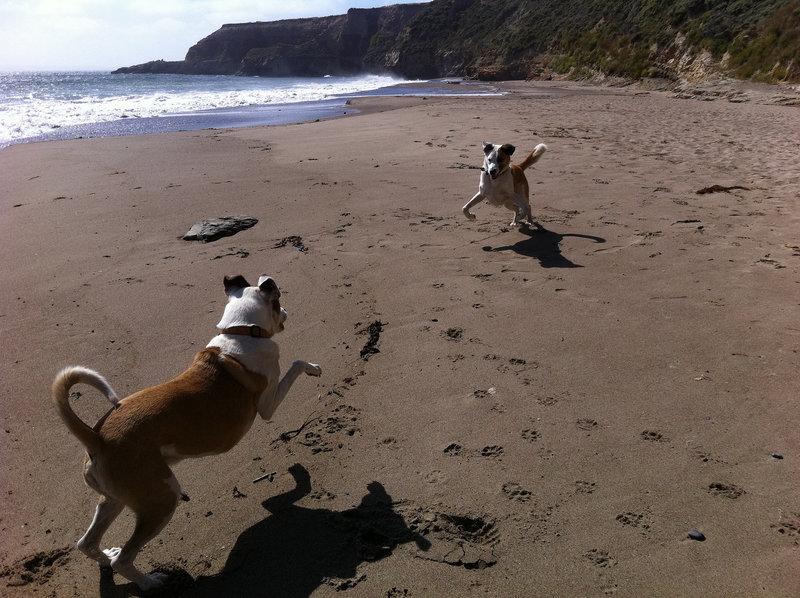 Everyone enjoys Kelham Beach